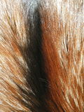 Fox fur. Coloured natural fox fur suitable as background Stock Photography