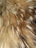 Fox fur. Coloured natural fox fur textures Royalty Free Stock Images