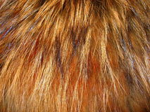 Fox fur. Natural colored fox fur suitable as background Stock Photography