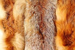 The fox fur Stock Image