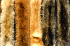 Fox fur. The background of fox fur Royalty Free Stock Images