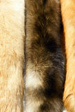 Fox fur. The background of fox fur Stock Photos