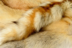 Fox fur animal texture background Stock Photography