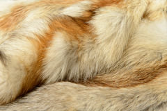 Fox fur animal texture background Stock Images