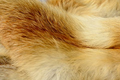 Fox fur animal texture background Royalty Free Stock Photography