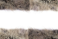 Fox fur Stock Images