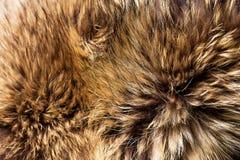 Fox fur. Background of beautiful fox fur Stock Image