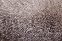 Fox fur. Stock Images