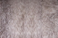 Fox fur. Stock Photography