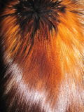 Fox fur Stock Images