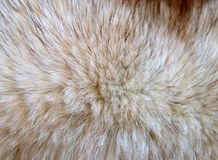 Fox fur over black background Royalty Free Stock Image