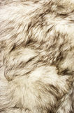 Fox fur texture Stock Images