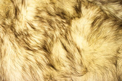 Fox fur texture Stock Photos