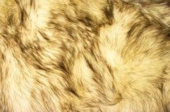 Fox fur texture Stock Photos