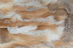 Fox fur texture background Royalty Free Stock Image