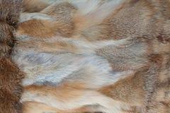 Fox fur texture background Stock Photo