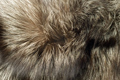 Fox fur Useful as background Stock Photo