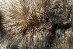 Fox Fur Useful As Background Stock Photo