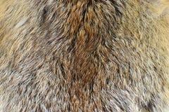Fox futerko Zdjęcie Stock