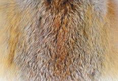 Fox futerko Fotografia Royalty Free