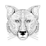 Fox głowy przodu rysunek Zdjęcia Royalty Free
