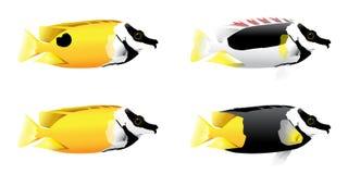 Fox-Gesichtsfische Stockbild