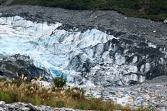 Fox Glacier Stock Image