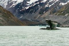 Fox-Gletscher und -eis, die auf einfrierendem Wassersee brechen stockbild