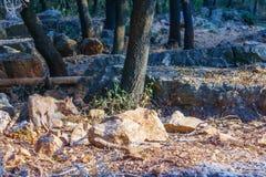 Fox in the Goren Park Stock Photos