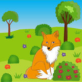 Fox on the grass. Between the bushes near the tree coloring pages Royalty Free Stock Image