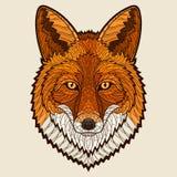 Fox head Stock Photo
