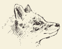 Fox head style vintage illustration drawn sketch Royalty Free Stock Photos