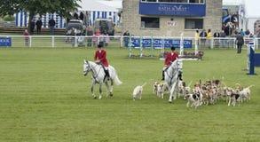 Fox-hounds de Blackmore et de Sparkford Vale au Salon Agricole Royal de Bath et de l'Ouest 2014 image libre de droits