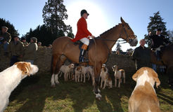 Fox hunter. Horse and hounds wait for the start of a fox hunt in England Stock Photo