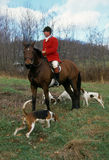 Fox hunting Stock Photos