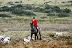 Fox hunting. A hunt from brecon and Talibont hunt up in the hils of senybrige stock photos
