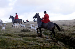 Fox hunting. A hunt from brecon and Talibont hunt up in the hils of senybrige royalty free stock photo