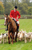 Fox Hunting. The hounds of the Cotswold Hunt enjoy an outing during the Hunt Team Chase 27.10.13 royalty free stock photo
