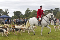 Fox hunting hounds Stock Image