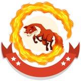 Fox jumping through fire hoop Stock Photos