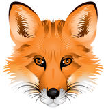 Fox-Kopf, realistisches Bild Stockfoto