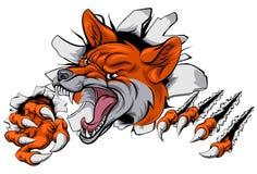 Fox mascot tearing through Royalty Free Stock Images