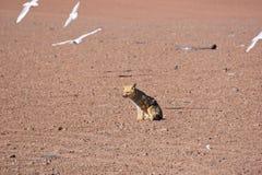 Fox nel deser con gli uccelli Fotografia Stock