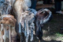 Fox pelts Royalty Free Stock Photo