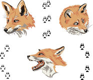 Fox, portrait, color, fox's snout, vector, silhouette, set. Portraits of foxes from different angles Royalty Free Stock Images