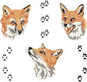 Fox, portrait, color, fox's snout, vector, silhouette, set. Portraits of foxes from different angles Stock Photos