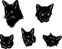 Fox, portrait, fox's snout, vector, silhouette, set. Portraits of foxes from different angles Stock Photos