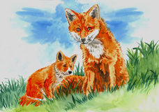 Fox with pup on the grass. Watercolor illustration of a red fox and pup sitting in the green grass Stock Photos