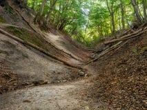 Fox Ravine near Jastrzebia Gora Stock Photography