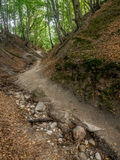 Fox Ravine near Jastrzebia Gora Royalty Free Stock Images